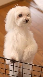 犬のスマホ写真