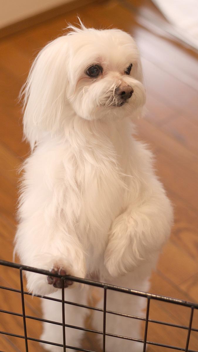 スマホ壁紙 犬の写真 壁紙 無料でダウンロード Pcやスマホ Iphone