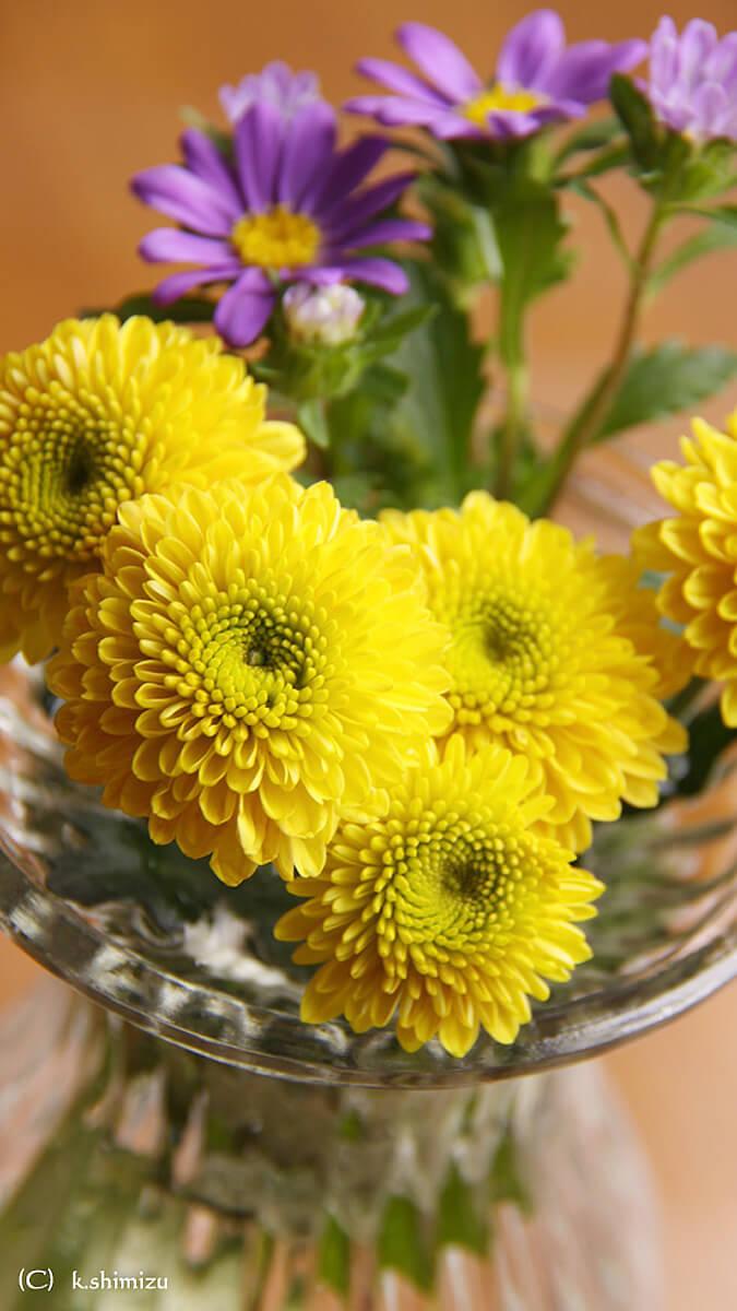 花瓶に挿した花壁紙 壁紙 無料でダウンロード Pcやスマホ Iphone