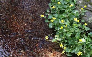 黄色の花写真壁紙